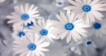 خلفيات زهور ونباتات جميلة جدا